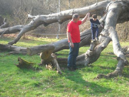 My son tom climbing on the huge fallen limbs of an ancient oak tree